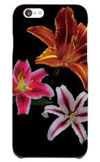 Night Lilys
